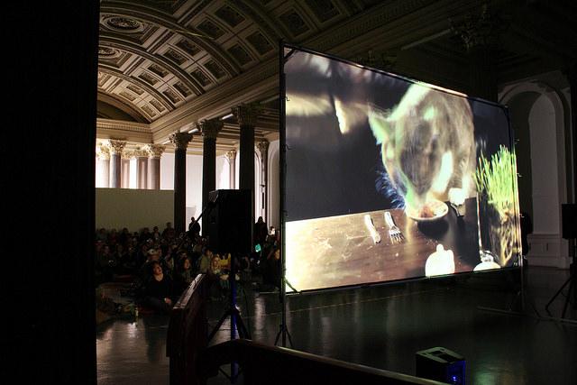Internet Cat Video Festival, Gallery 1, GoMA