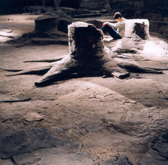 Fossil Grove, Ilana Halperin, courtesy and copyright the artist
